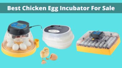 Photo of Top 3 Best Chicken Egg Incubator for Sale | Reviews and Top Picks