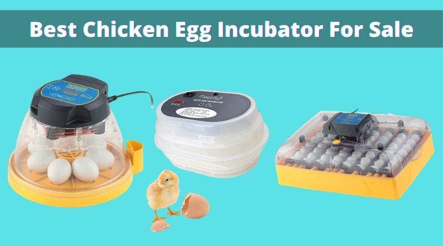 best chicken egg incubator for sale